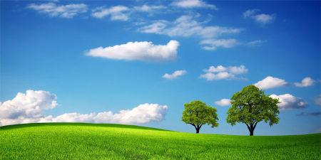 """Con l'eliminazione degli allevamenti intensivi la Terra potrebbe  tornare a """"respirare"""""""