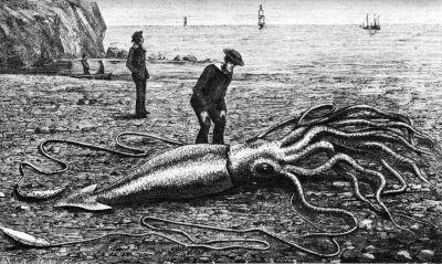 Calamaro gigante, Baia di Trinity, Isola di Terranova, 1877