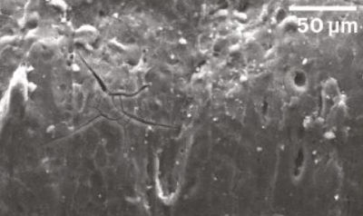 Esempio di immagine al microscopio elettronico a scansione che mostra la struttura superficiale di un frammento di grano con superficie liscia, quasi vitrea, a dimostrazione che il chicco si è gelatinizzato per probabile effetto della bollitura