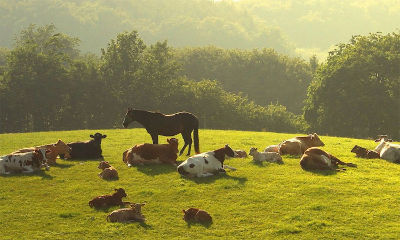 Un santuario per animali